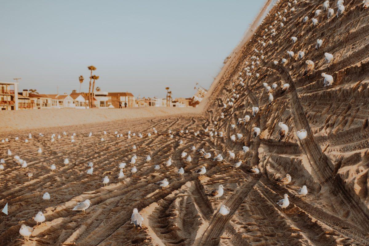 Photoshop, Warp, Beach, Birds