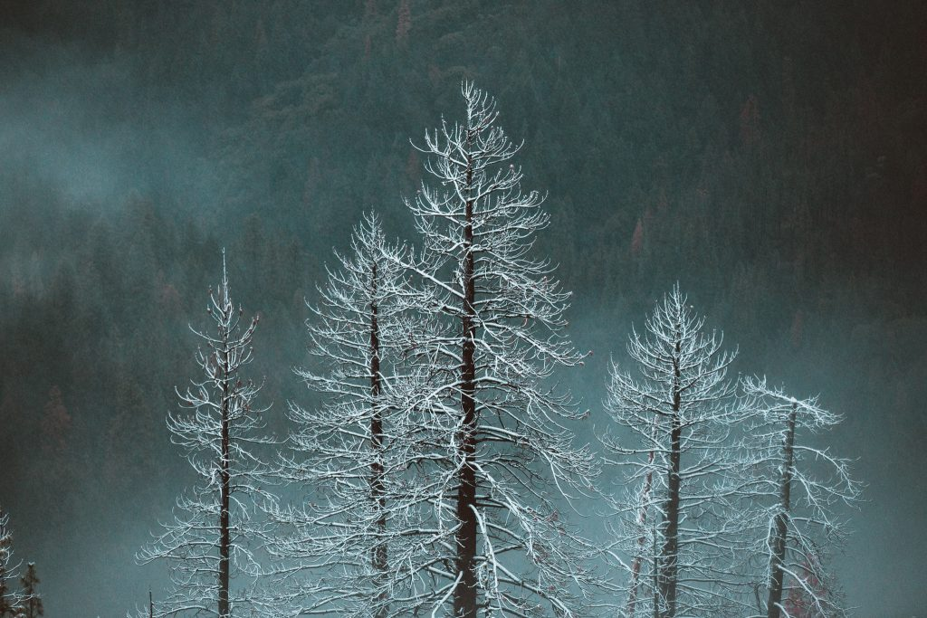 Yosemite, Winter, Ryan Longnecker